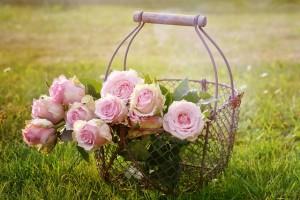 roses-for-hair